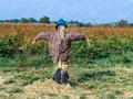 Scarecrow In Field Stock Images - 67100654