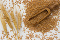 Grains Of Wheat, Wooden Spoon, Barley Stock Photo - 67150140