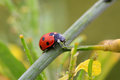 Lady Bug Stock Image - 67163301