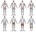 Exercising. Back Projection Of The Human Body Royalty Free Stock Image - 67199766