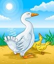 Vector Goose Mother With Gosling Kids Royalty Free Stock Photo - 6724415