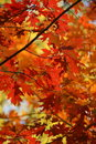Autumn Leaves Stock Images - 6725394