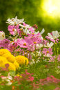Flowers In The Garden. Stock Photography - 67246592
