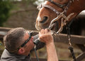 Dental Treatment From An Equine Professional Stock Image - 67279921