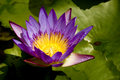 Water Lily Royalty Free Stock Photos - 6739138