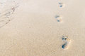 Footprints On The Beach Stock Images - 67301354