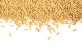 Dry Paddy Rice Grain On White Background Stock Image - 67329391