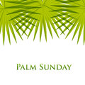 Palm Leafs  Background. Vector Illustration  For The Christian Holiday Palm Sunday. Royalty Free Stock Photography - 67342017