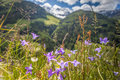 Flower Meadow In South Tyrol Stock Photos - 67350193