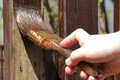 Painting The Wooden Garden Fence Royalty Free Stock Photography - 67369197