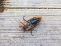 June Bug Royalty Free Stock Photography - 67436717