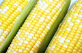Fresh Corn Stock Photos - 67450433