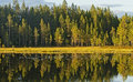 Displaying Autumn Forest In Water Stock Photo - 67450850
