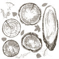 Gray Cross Section Of Tree Trunk And Leaves Set. Stock Photos - 67458933