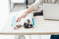 Happy Cat Relaxing On A Desk Royalty Free Stock Images - 67464219