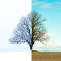 Lonely Tree Change From Winter To Spring Royalty Free Stock Photo - 67467795