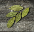 Dry Bay Leaf Royalty Free Stock Photography - 67491087