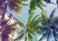 Tropic Palms, Toned Photo Stock Photo - 67529810