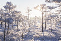 Frosty Morning At Forest. Landscape With The Frozen Plants, Trees And Water. Stock Images - 67558104