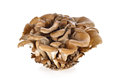 Bunch Of Maitake Mushroom On White Royalty Free Stock Photo - 67567055