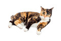 Pretty Calico Cat Laying On White Background Royalty Free Stock Photos - 67593258