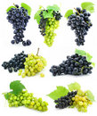 Collection Of Ripe Fruit Grape Cluster Isolated Stock Photos - 6764333