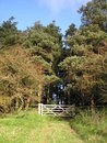 Five Bar Gate Into The Woods Stock Images - 6764644