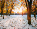 October Mountain Beech Forest With First Winter Snow Royalty Free Stock Image - 67628496