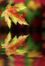 Autumn Colors Royalty Free Stock Photo - 6771125