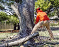 Professional Tree Remover Cuts Tree Stock Photos - 67710263