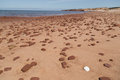 White Shell And Scattered Rocks At Cavendish Beach Royalty Free Stock Photography - 67716497