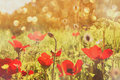 Abstract And Dreamy Photo With Low Angle Of Red Poppies Against Sky With Light Burst. Vintage Filtered And Toned Stock Images - 67772314