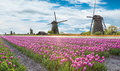 Windmill With Tulip Field In Holland Stock Photography - 67803512