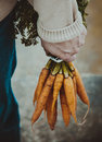 Fresh Carrots Royalty Free Stock Images - 67806309