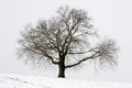 Winter Tree Royalty Free Stock Photography - 67807007