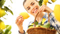 Smiling Woman Picks A Lemon And Put It In The Basket Royalty Free Stock Photo - 67811445