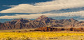 Desert Gold Bloom Royalty Free Stock Photography - 67811617