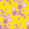 Yellow Background Cherry Blossom Royalty Free Stock Photography - 67840927