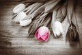 Bouquet Of Tulips Stock Image - 67845081