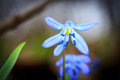 Blue Wild Flowers Royalty Free Stock Images - 67860759