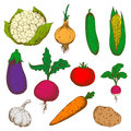 Color Ripe Vegetables Sketches Set Royalty Free Stock Photo - 67897415