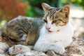 Lazing Cat Royalty Free Stock Image - 67953086
