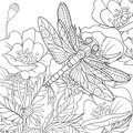 Zentangle Stylized Dragonfly Insect Stock Photos - 67964973