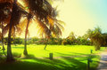 Sunset Over Beautiful Tropical Garden In Luxury Carribean Resort Royalty Free Stock Photo - 67981085