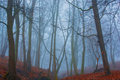 Beautiful Mystery Forest With Fog And Autumn Leaves On The Ground Stock Photos - 67983103