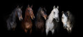 Horses On Black Stock Photo - 67994030