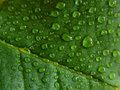 Water Droplets On Green Leaf Royalty Free Stock Photos - 682838