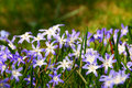 Spring Flowers Stock Images - 687604
