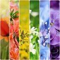 Spring Flowers Collage Royalty Free Stock Photography - 68093807