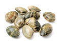 Stacked Fresh Raw Clams Royalty Free Stock Image - 68143516